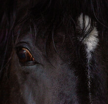 Pferd Portrait Ausschnitt Quad...