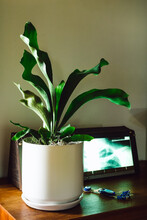 Interior With Staghorn Fern, Lightbox With X-Ray And Evil Eye