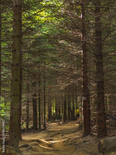 Fototapeta Górski szlak turystyczny w Bieszczadach obraz