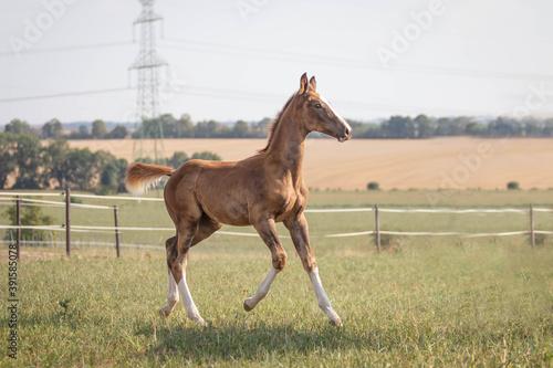 Foto foal in field