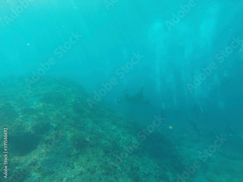 underwater scene with reef Canvas