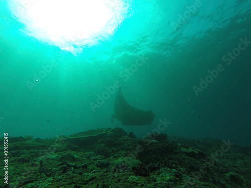 Papel de parede underwater scene of a reef