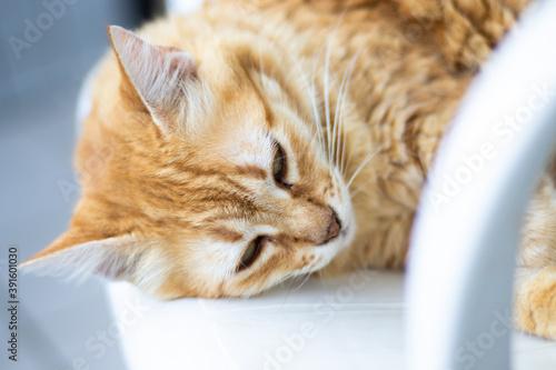 Vászonkép gato de cor laranja dormindo em uma cadeira branca