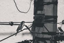 Pájaro En Cables