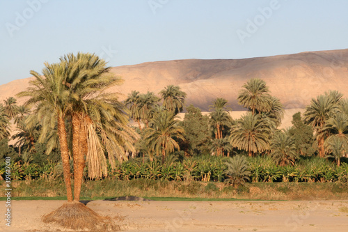 oasis in the desert Canvas