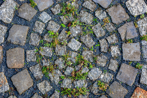 Fotografiet Top view of plants growing from inside the stones of the ground - concept: rebir