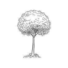 Vector Sketch Illustration. Bl...
