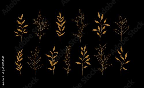 Fototapeta Set of vector plants and herbs. Hand drawn floral elements. obraz
