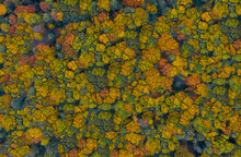Aerial View Of Colourful Trees...