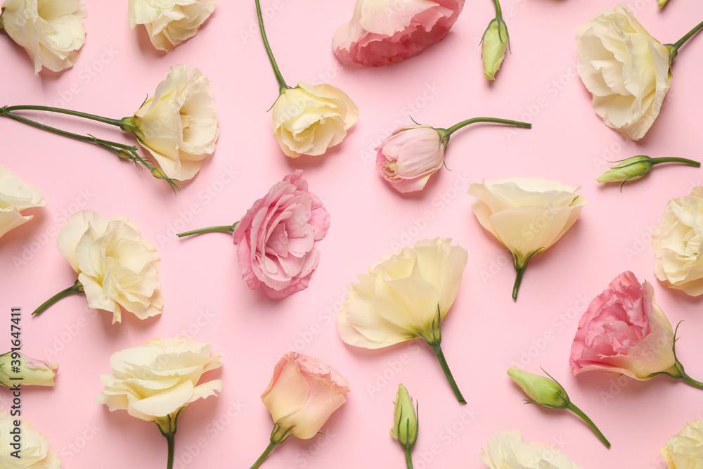 Fototapeta Beautiful Eustoma flowers on pink background, flat lay