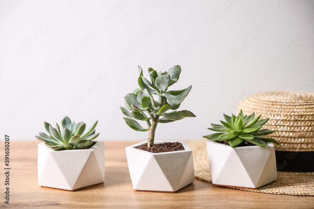 Fototapeta Beautiful succulents and hat on wooden table. Interior decoration