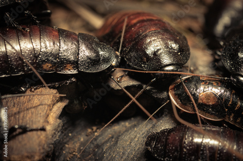 Foto Closeup of a group of bugs gathering on a piece of wood