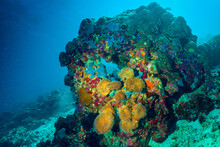 Underwater Image Of A Bright C...