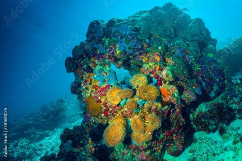 Underwater image of a bright coral reef in the Indian Ocean Fotobehang