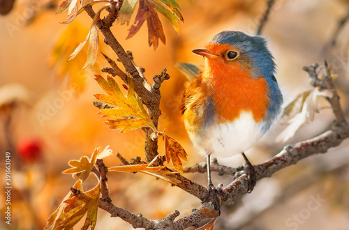 Photo Closeup shot of an amazing cute robin bird perched on an autumnal tree branch