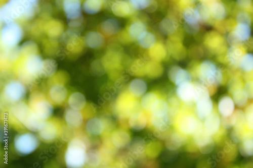Fotomural Light shining on tree leaves