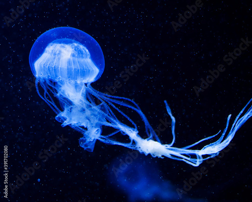 Closeup shot of jellyfish swimming in the blue dark waters