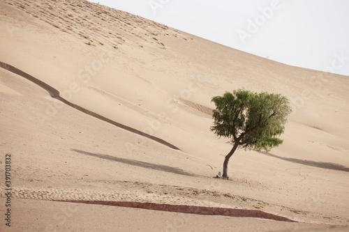 Fotografering sand dunes in the desert