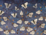 Butterflies on thorns painted on the dark blue grunge wall. Beautiful design for postcard, picture, mural, wallpaper, photo wallpaper. - 391718272