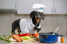 Black And Tan Dachshund Cooker...
