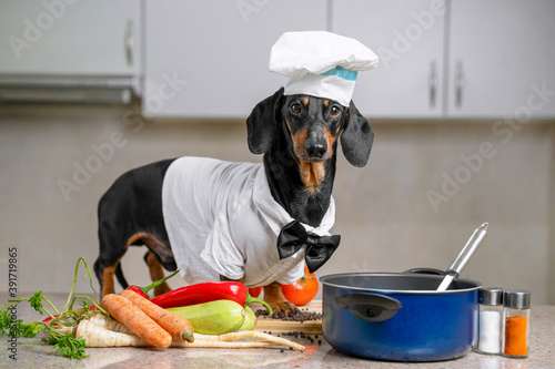 Black and tan dachshund cooker wearing white chef hat and robe and a pink bow tie in the kitchen, in cooking process Wallpaper Mural