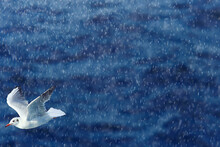 Seagull Flies Over The Sea, Co...
