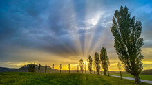 Pappel Allee Im Sonnenlicht, S...