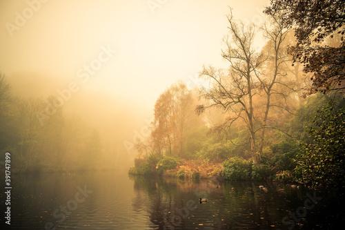 Canvas Print Mist at Fishpond Wood, Nidderdale