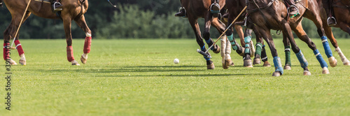 Fototapeta Playing equestrian polo. There are many horse legs and a group of riders in attack with a hammer. obraz