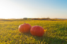 Two Pumpkins On The Grass. Aut...