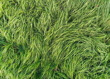 The Texture Of Long, Tall Gree...