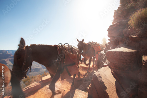 View of a few horses passing by in grand canyon environment