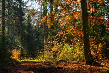 Herbst im Bayrischen Wald