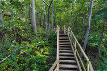Wooden Path Through Forest In ...