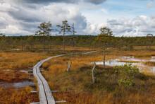 Peat Marsh Landscape In Nature...