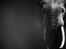 Forest Elephants (Loxodonta Af...