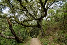 Large Oak Trees Grow On Sides ...