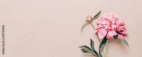 Beautiful pink peony on paper background Fototapet