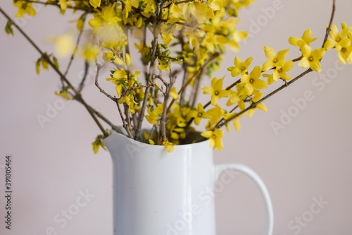Fototapeta forsythia in a white vase against a pink wall