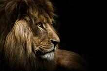 The Lion King Pt. 2