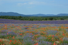 French Provence Lavender And P...