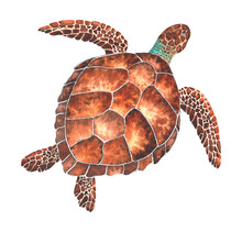 Watercolor Sea Turtle. Hand Drawn Illustration Isolated On A White Background. The Image Of Sea Creatures Swimming Underwater World.