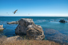 Pismo Beach Cliffs And Flock Of Birds. Horizon Over The Ocean. California Coastline