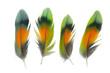 Leinwandbild Motiv Beautiful collection parrot lovebird feather isolated on white background
