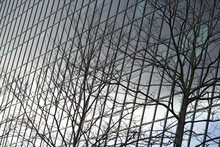 Bare Tree Branches In Front Of A Glass Facade Of A High Rise Office