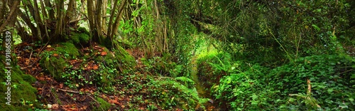 Obraz Small forest stream in a green hazel and oak forest in Brittany, France. Moss, fern, plants, rocks close-up. Breathtaking panoramic view. Atmospheric summer landscape. Nature, ecology, environment - fototapety do salonu