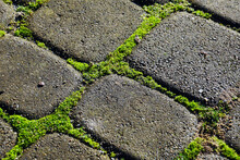 Paving Stones With Ingrown Weeds And Moss. An Annual Problem In Front Of The House.