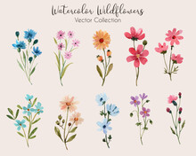 Watercolor Wildflowers Vector Collection