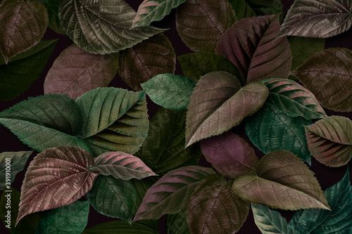 Metallic green and purple leaves textured background