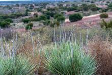 Moor Grass And Tumbleweeds